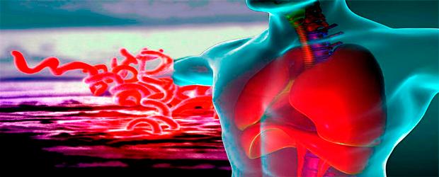 Сифилитическая инфекция внутренних органов